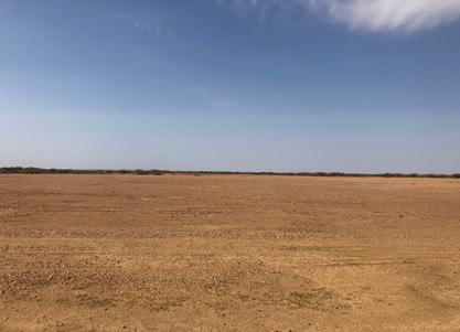 写真 トゥルカナ(果てしなく広がる乾いた大地の下に原油が眠る)(8月1日、ジェトロ撮影)
